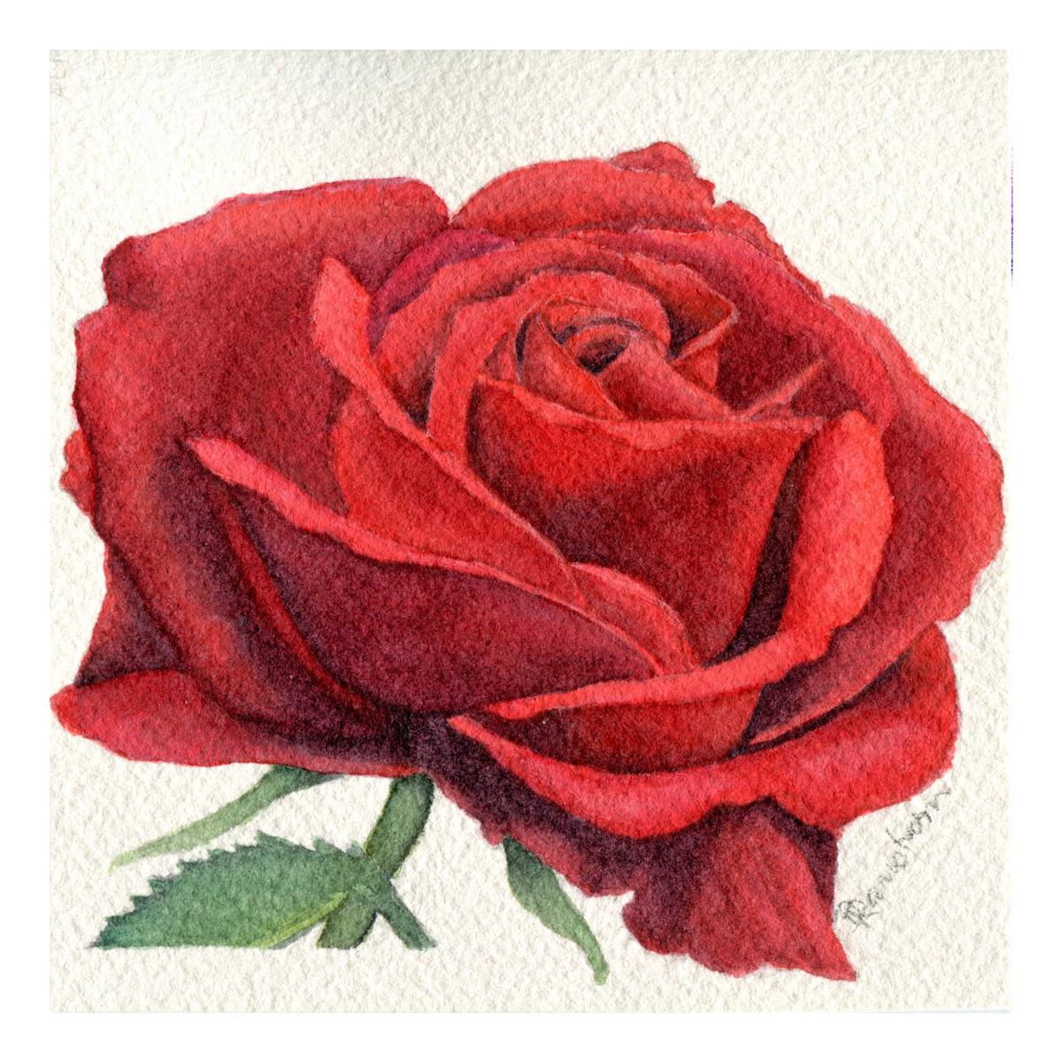 Red rose watercolor mini
