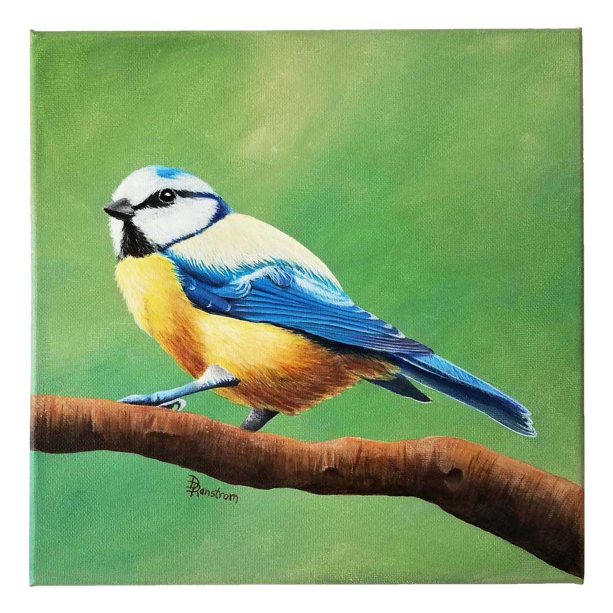 blue tit acrylic painting
