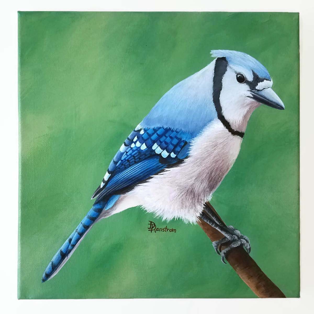 blue jay acrylic painting