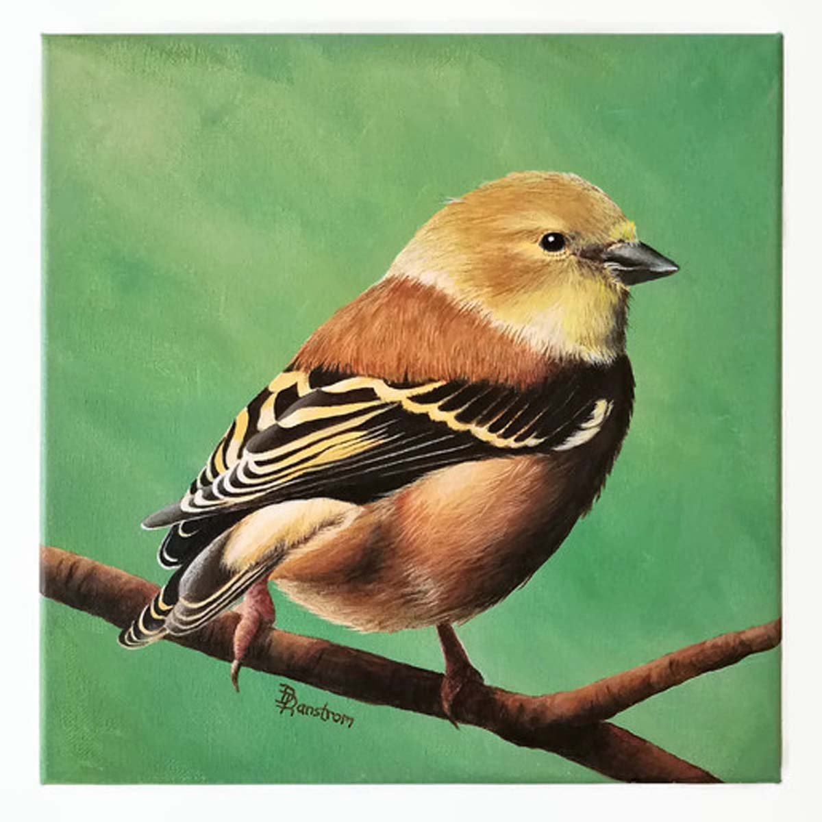 goldfinch acrylic painting