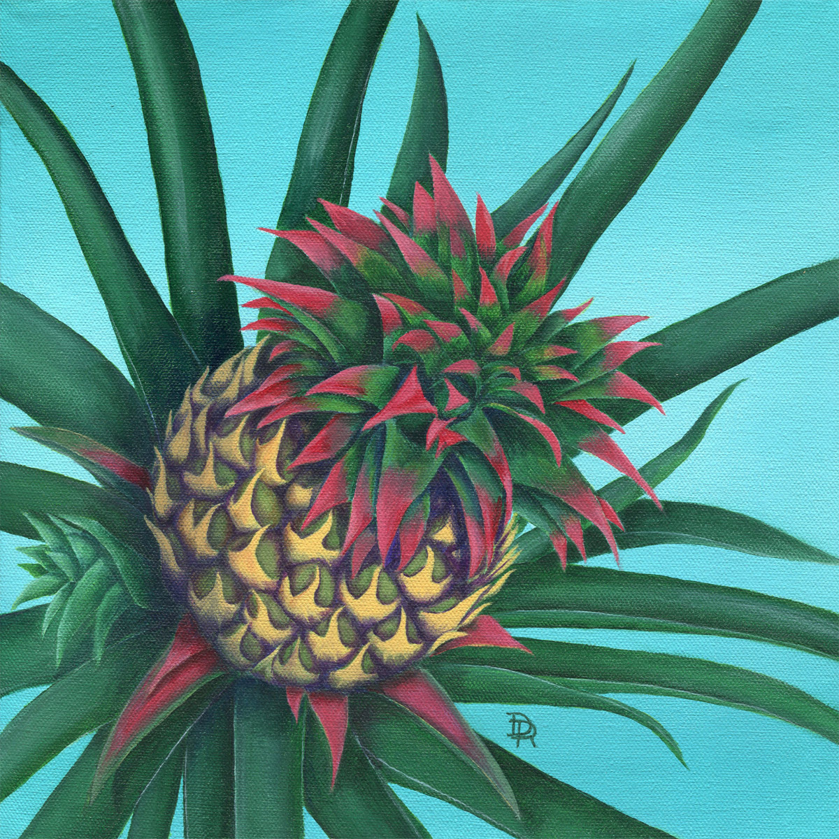 pineapple plant with slip