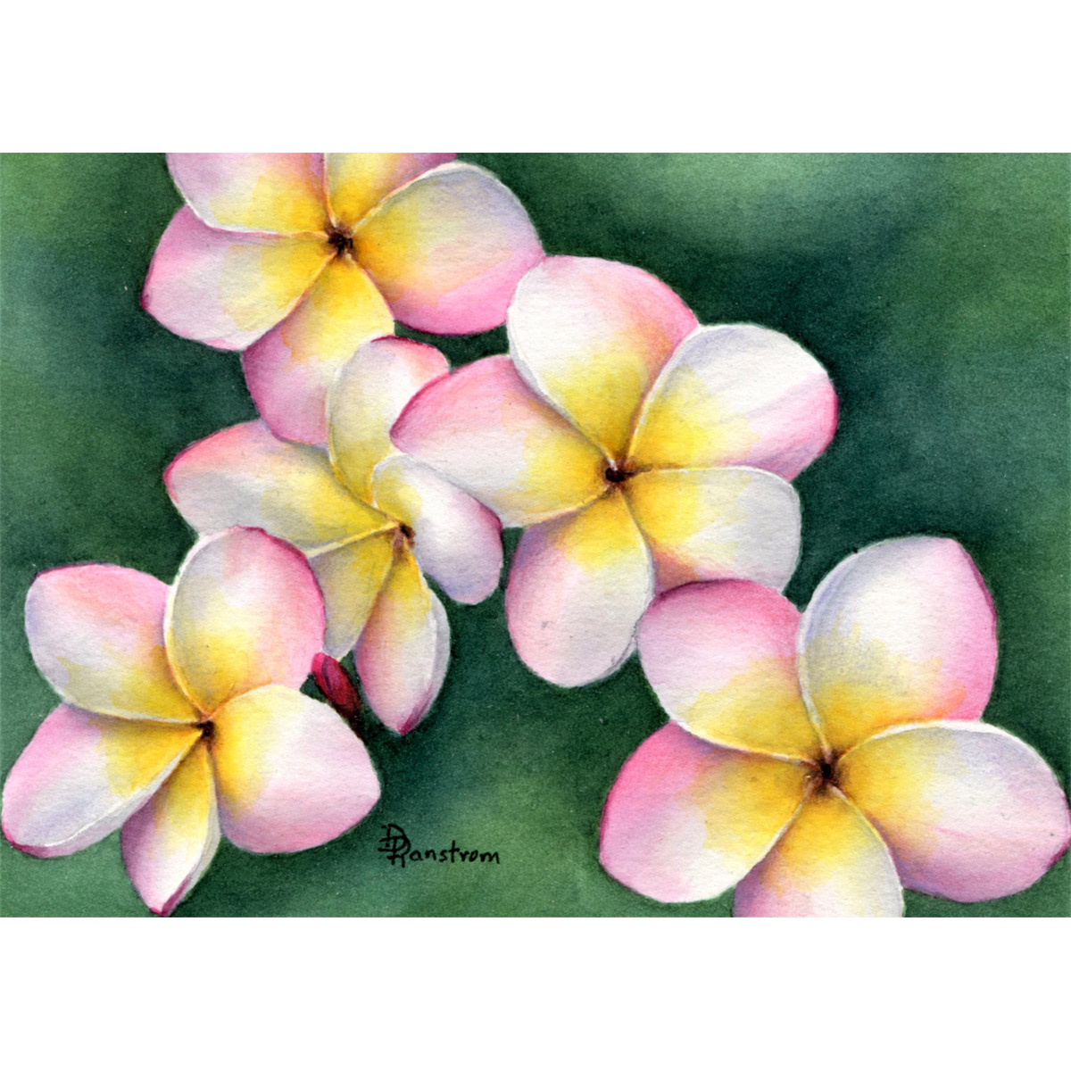 plumeria watercolor painting