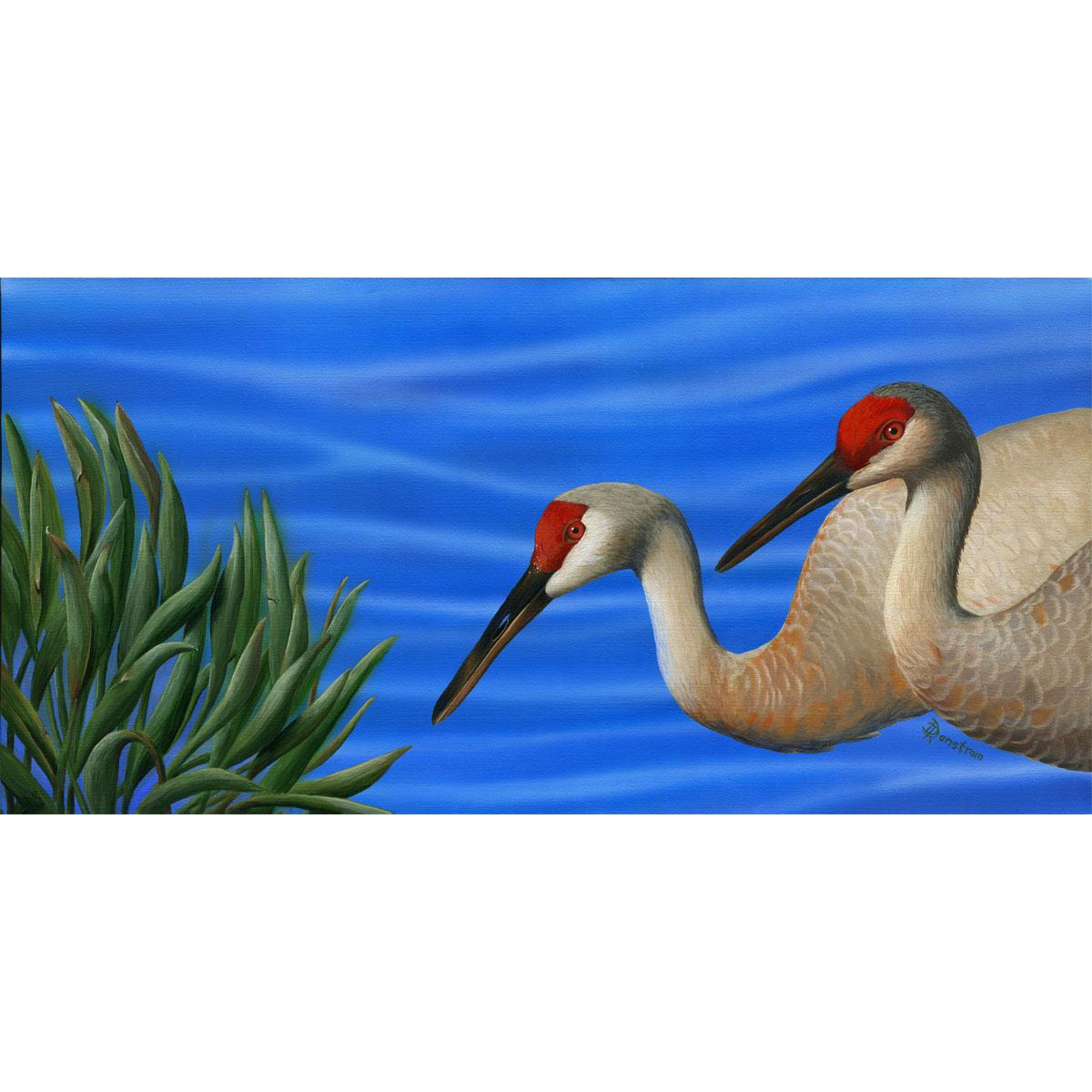 sandhill cranes image