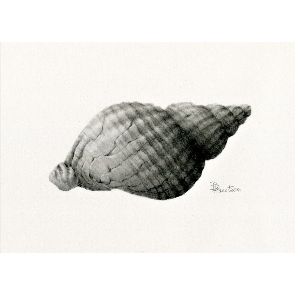shell 1 giclee