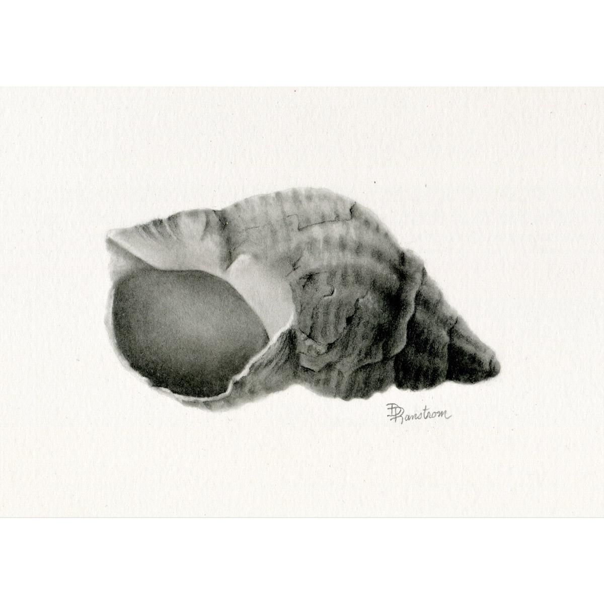shell 2 giclee