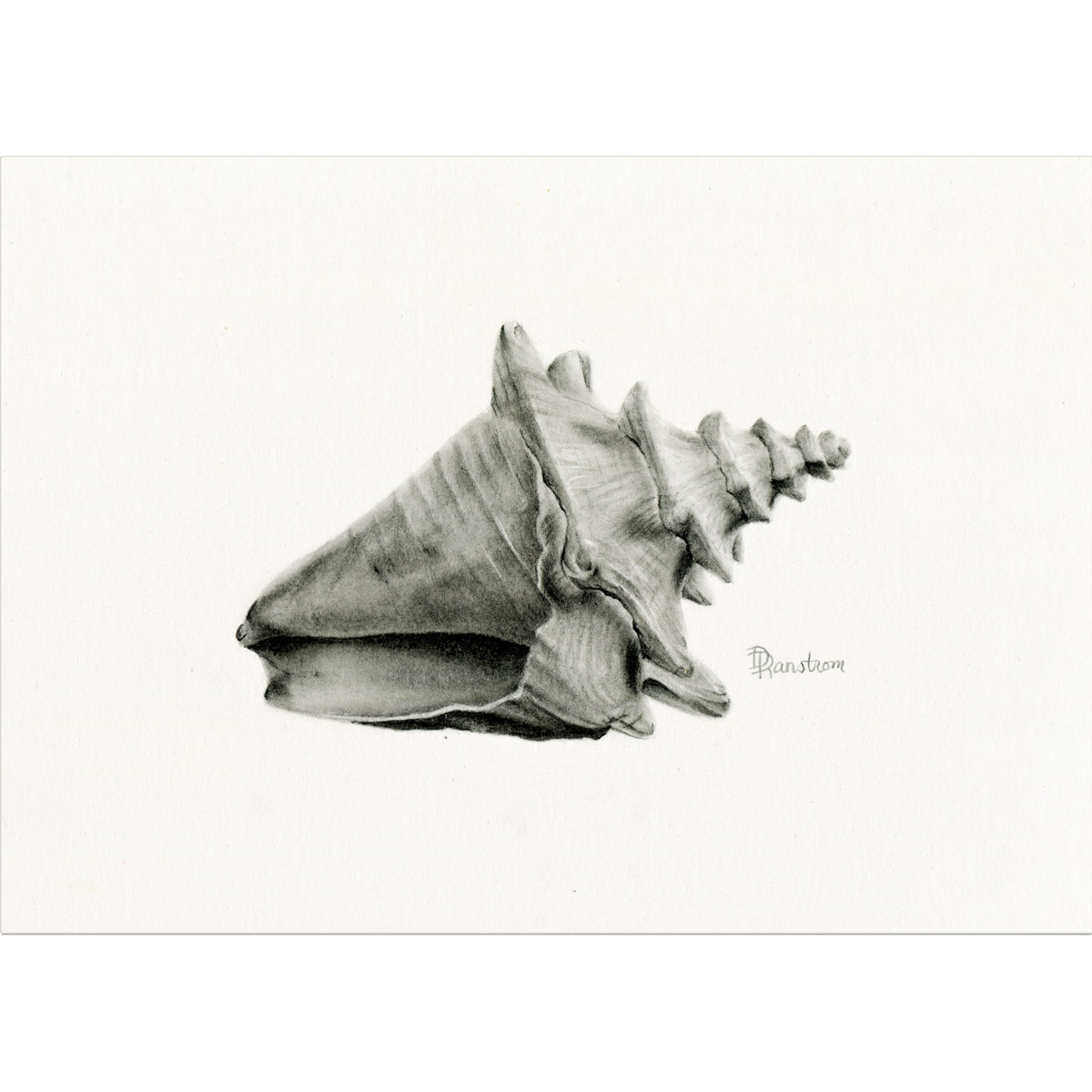shell 3 giclee