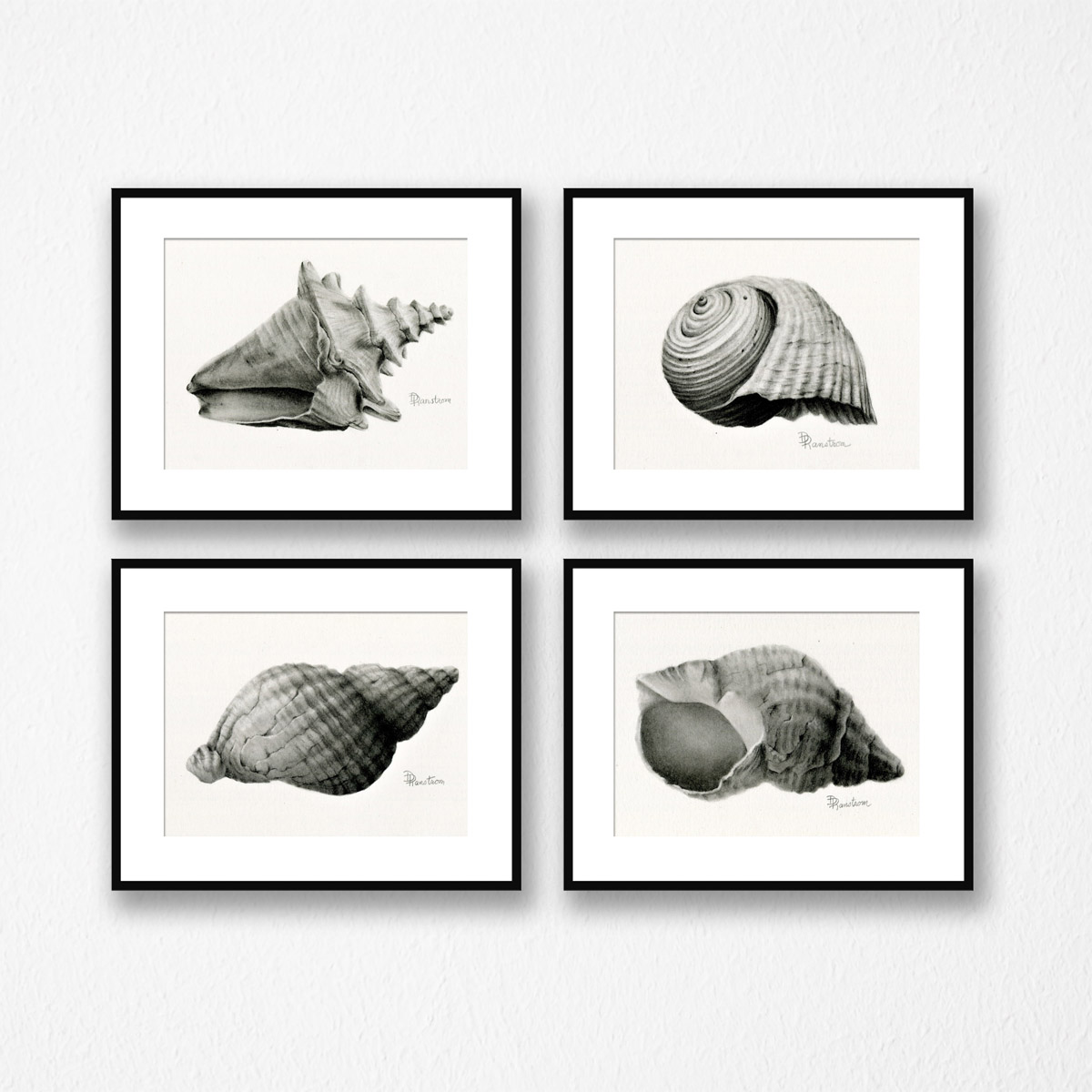 shell giclee set